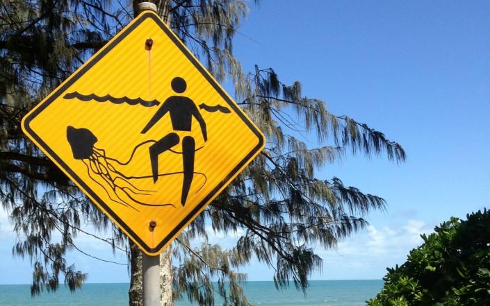 Les dangereuses méduses d'Australie