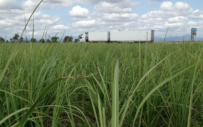 L'Australie, l'autre pays producteur de sucre
