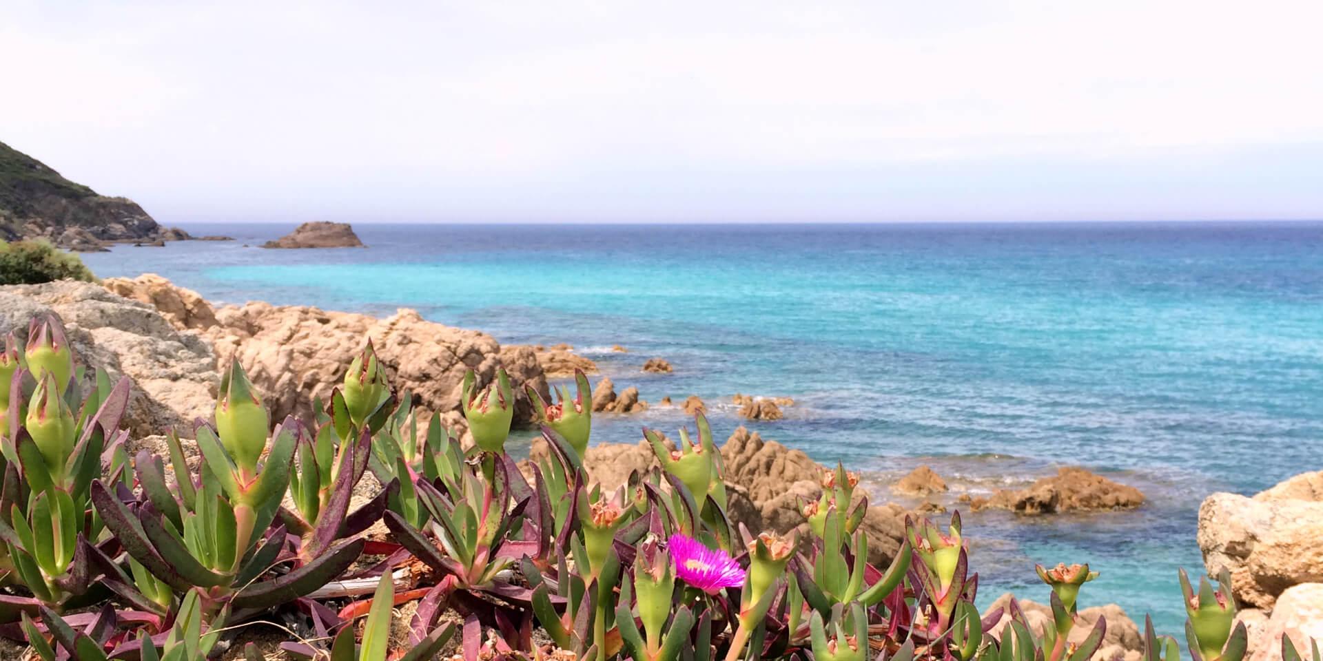 Végétation sur le Sentier des Douaniers près d'Ajaccio, Corse.