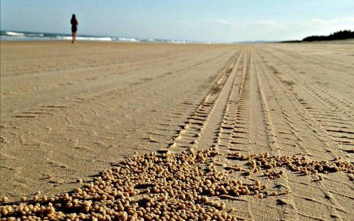 Les crabes sculpteurs de sable