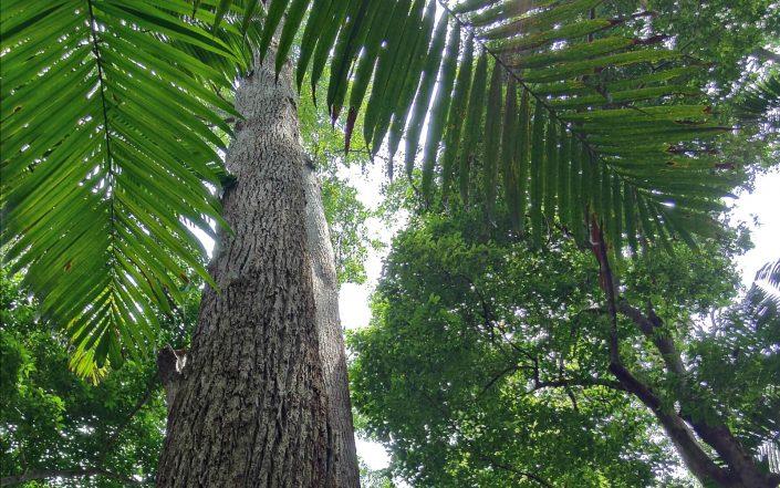 Fraser Island : voyage en forêt tropicale