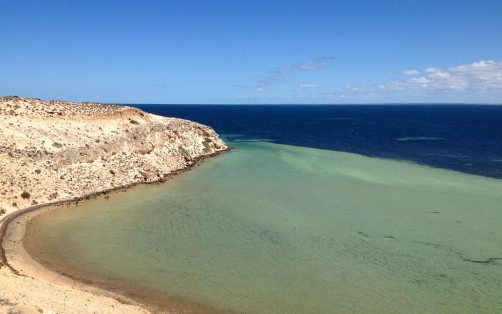 La vie sous-marine de Shark Bay
