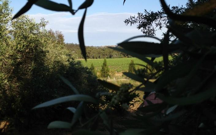 Un coin de Provence en Australie du Sud